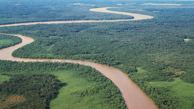 Forêt-Guyane